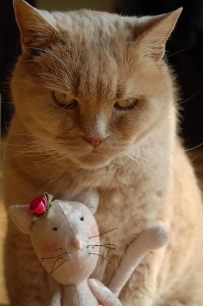 Tilda Katze, Tilda Cat, Tildas hus, Tone Finnanger, Burlesque Cat, Katze im Bikini, Katzenliebe, Katze selbstgenäht, Stofftier nähen